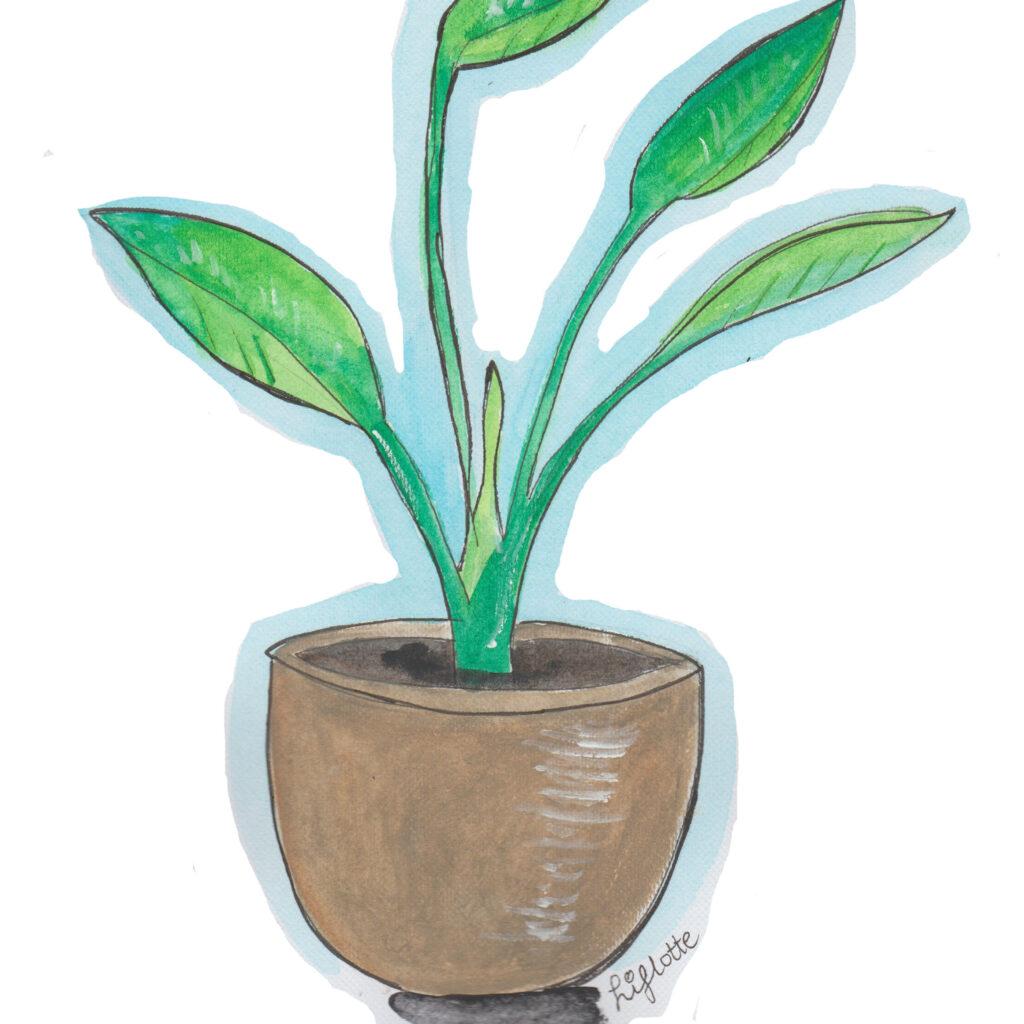 Liflotte plant in gouden pot los JPEG